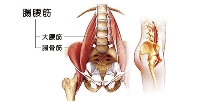 インナーマッスル腸腰筋
