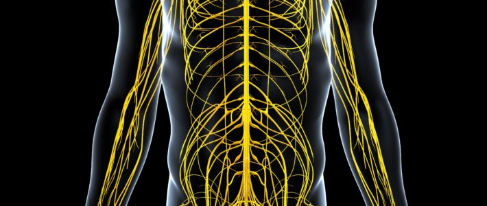 交換神経と副交感神経のバランス